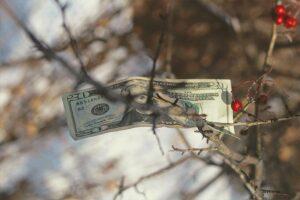 Image of money in tree